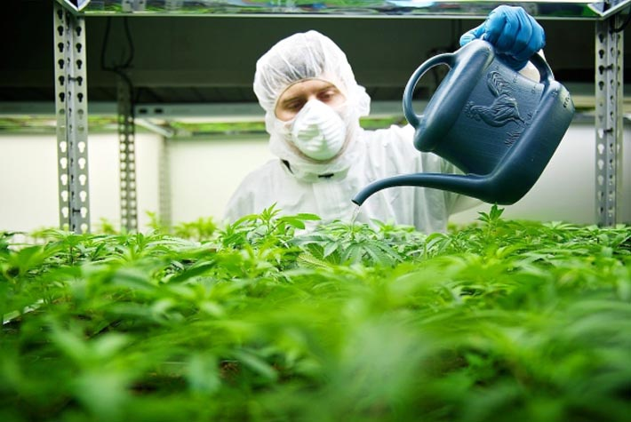 Canadas Biggest Cannabis Producers